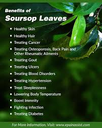 Benefits of taking soursop